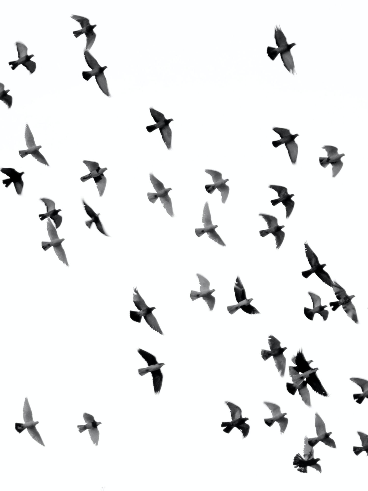 'Overwhelming': hundreds of migrating birds die after crashing into NYC glass towers