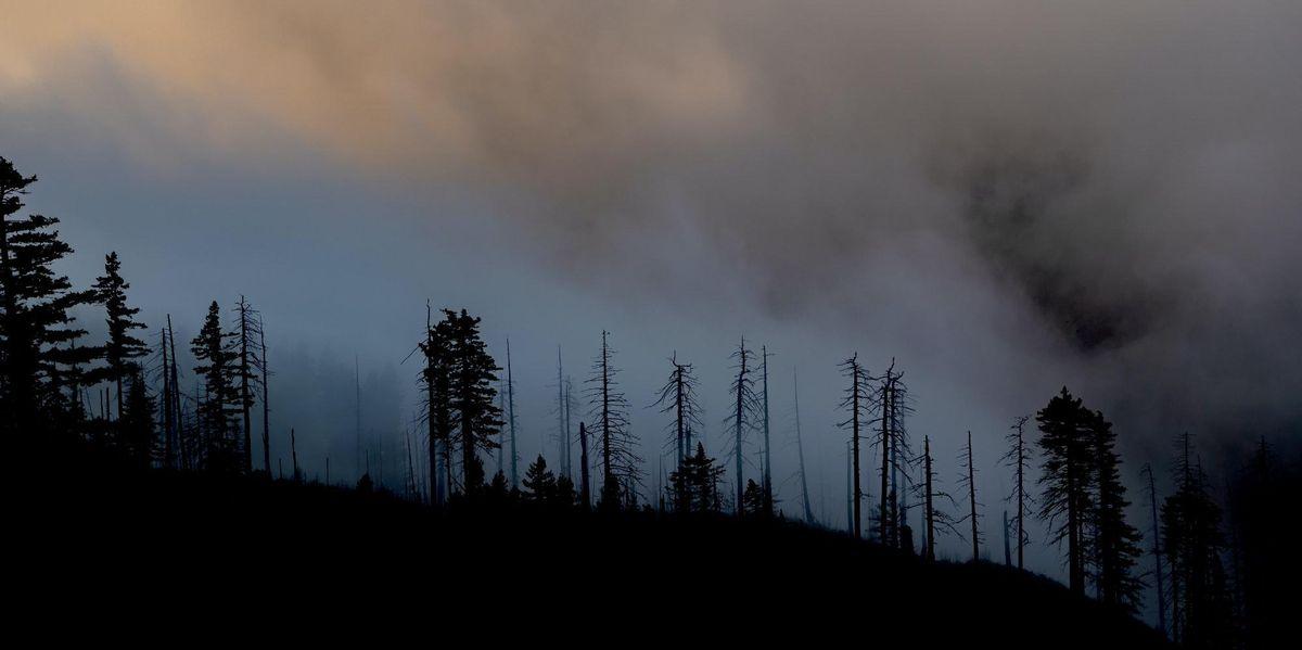 Wildfire smoke deaths