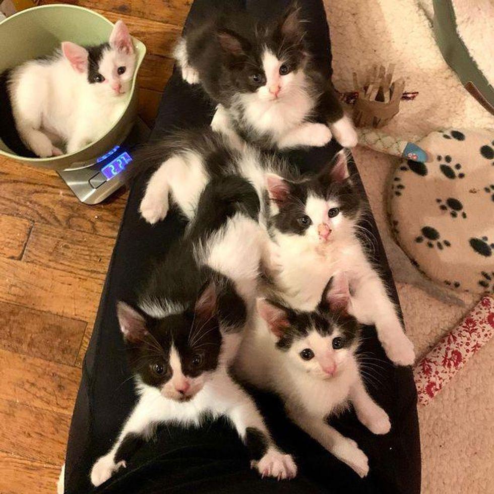 full lap of cats