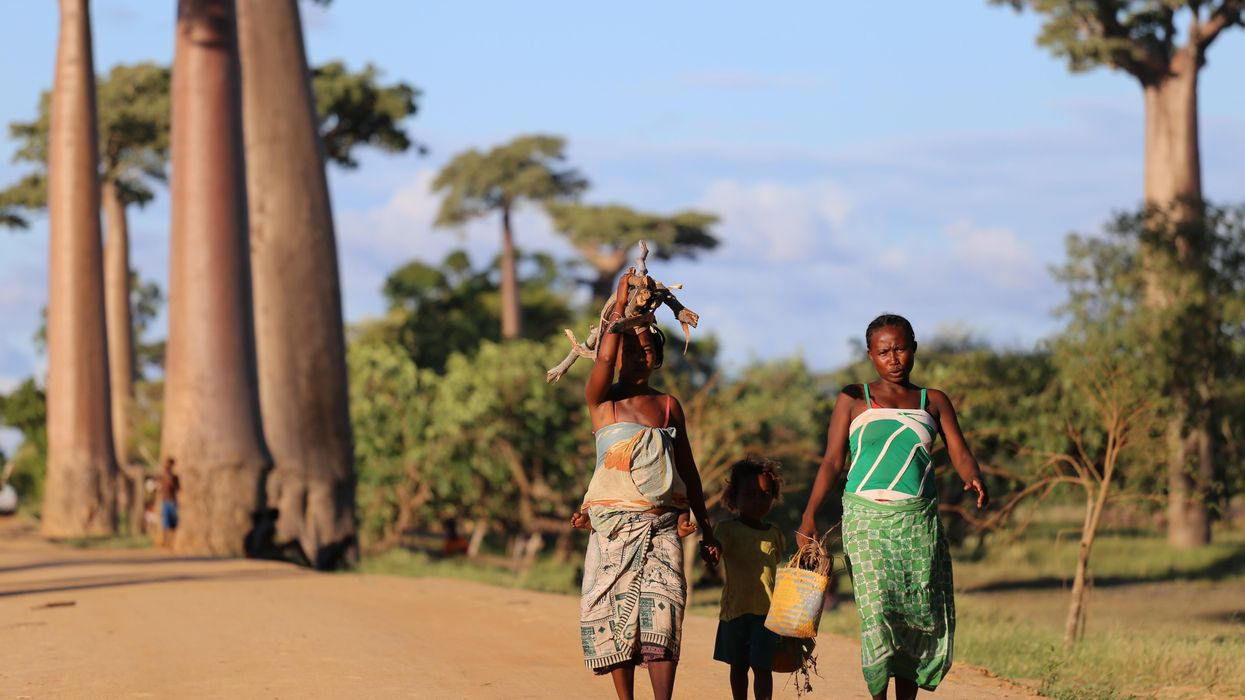 Madagascar: How climate change contributed to Madagascar's food crisis
