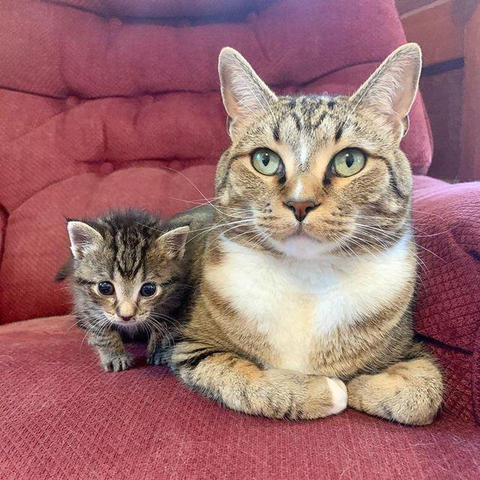 tabby cat and kitten