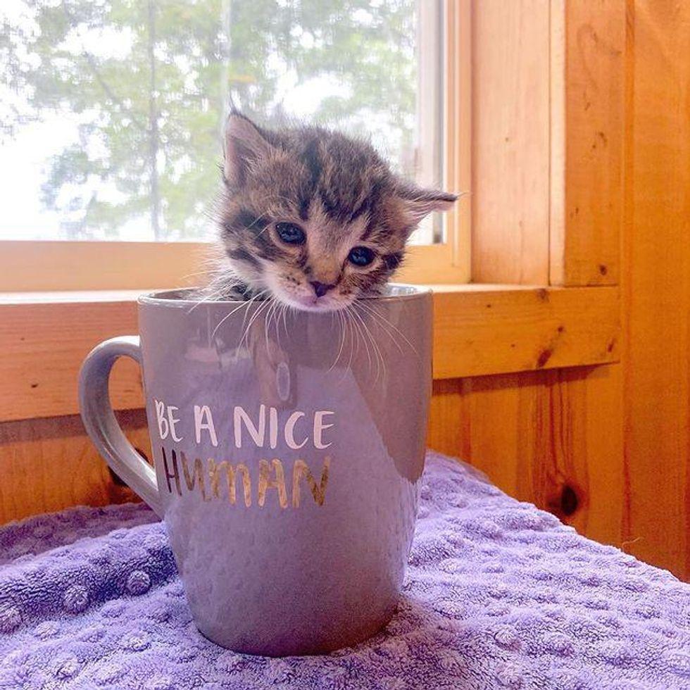 tiny kitten cup