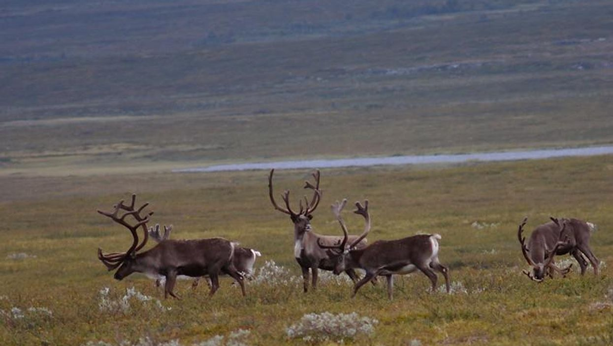 Novatek's new Arctic license areas are located in a protected nature reserve