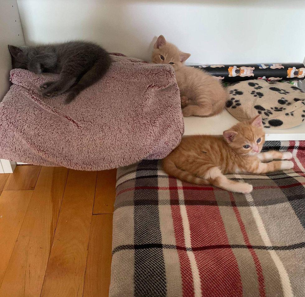 kitten brothers
