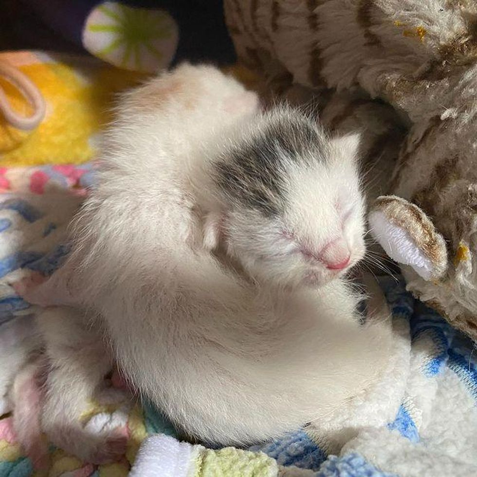 newborn cuddly kittens