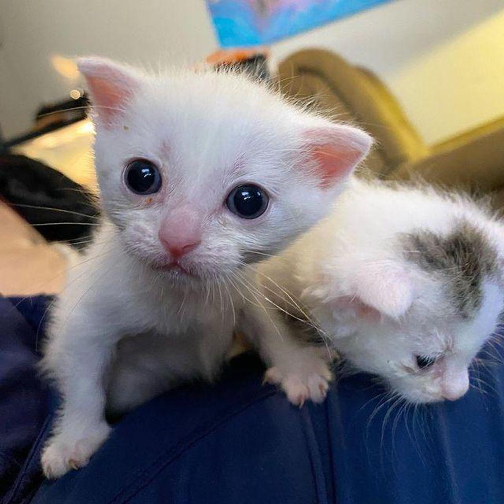 adorable tiny kittens
