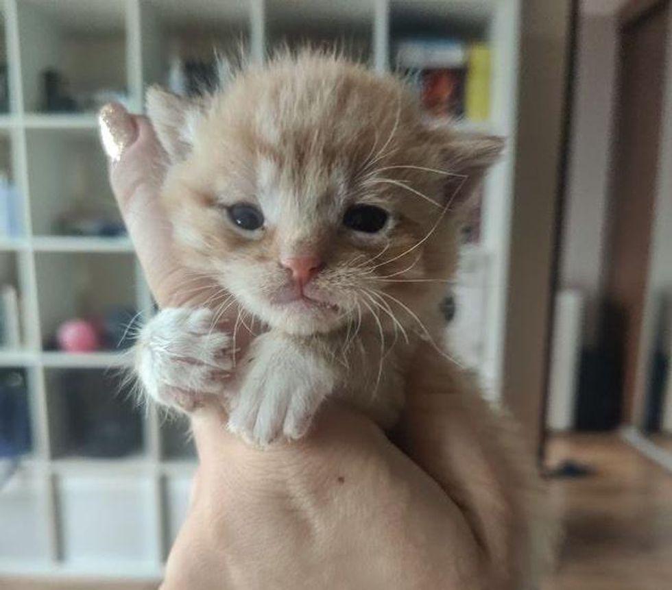 orange kitten tiny