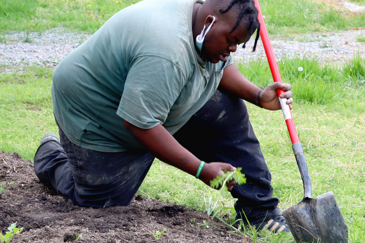 """These organizations are planting trees to combat the """"urban heat island effect"""" in Richmond"""