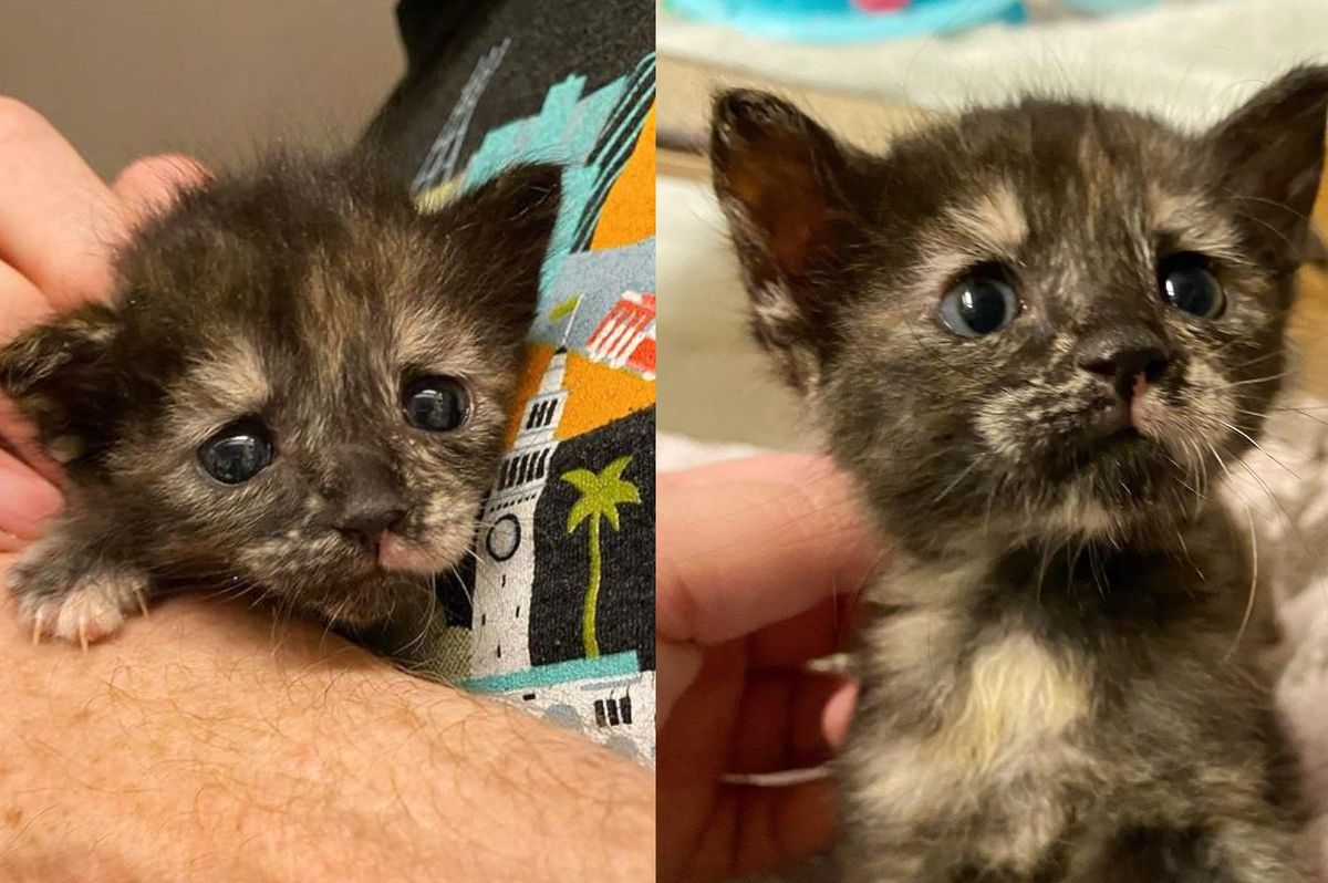 Tortie Kitten is So Happy to Have Family to Hold onto After She Waited Days for Foster Care