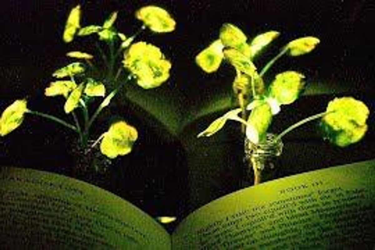 Bioluminescent plants could be the sustainable light source of the future