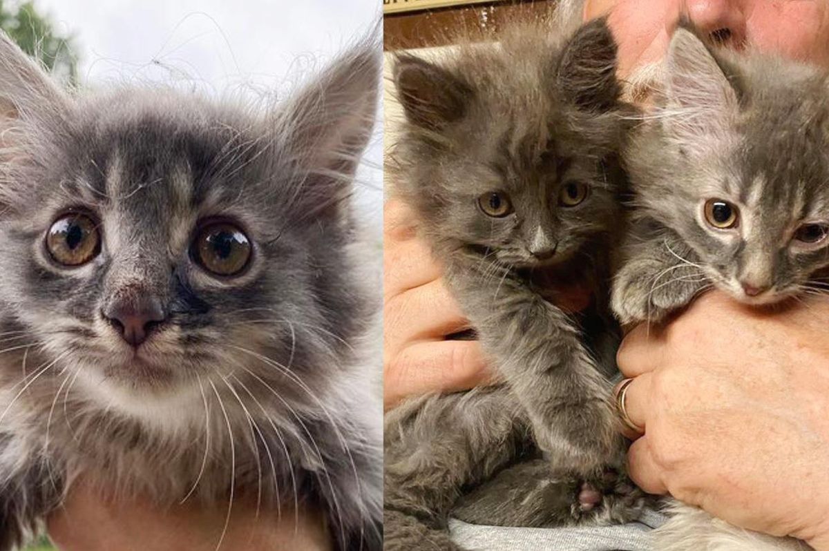 Woman Helps Kitten Cowering on Window Ledge and Goes Back to Find Her Cat Brother