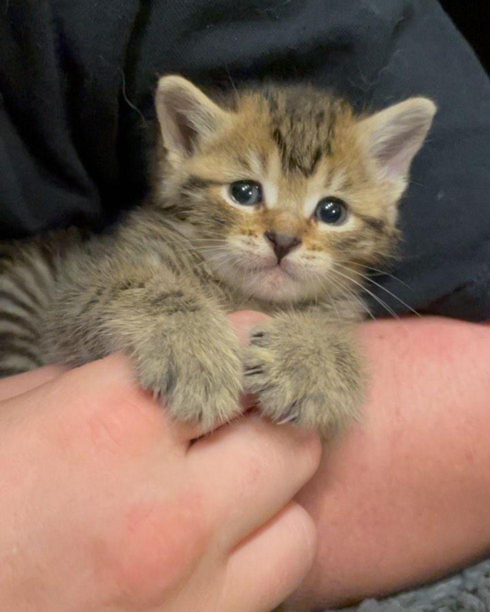 kitten cuddles