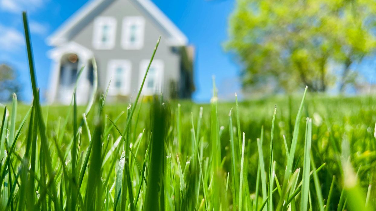 Your lawn is an 'ecological dead zone.' The case for replacing it with native plants