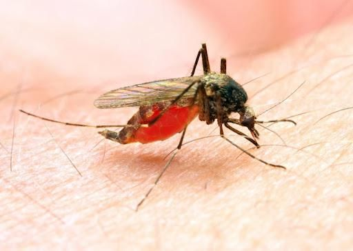 Is Hydroxychloroquine Prevention of Malaria?