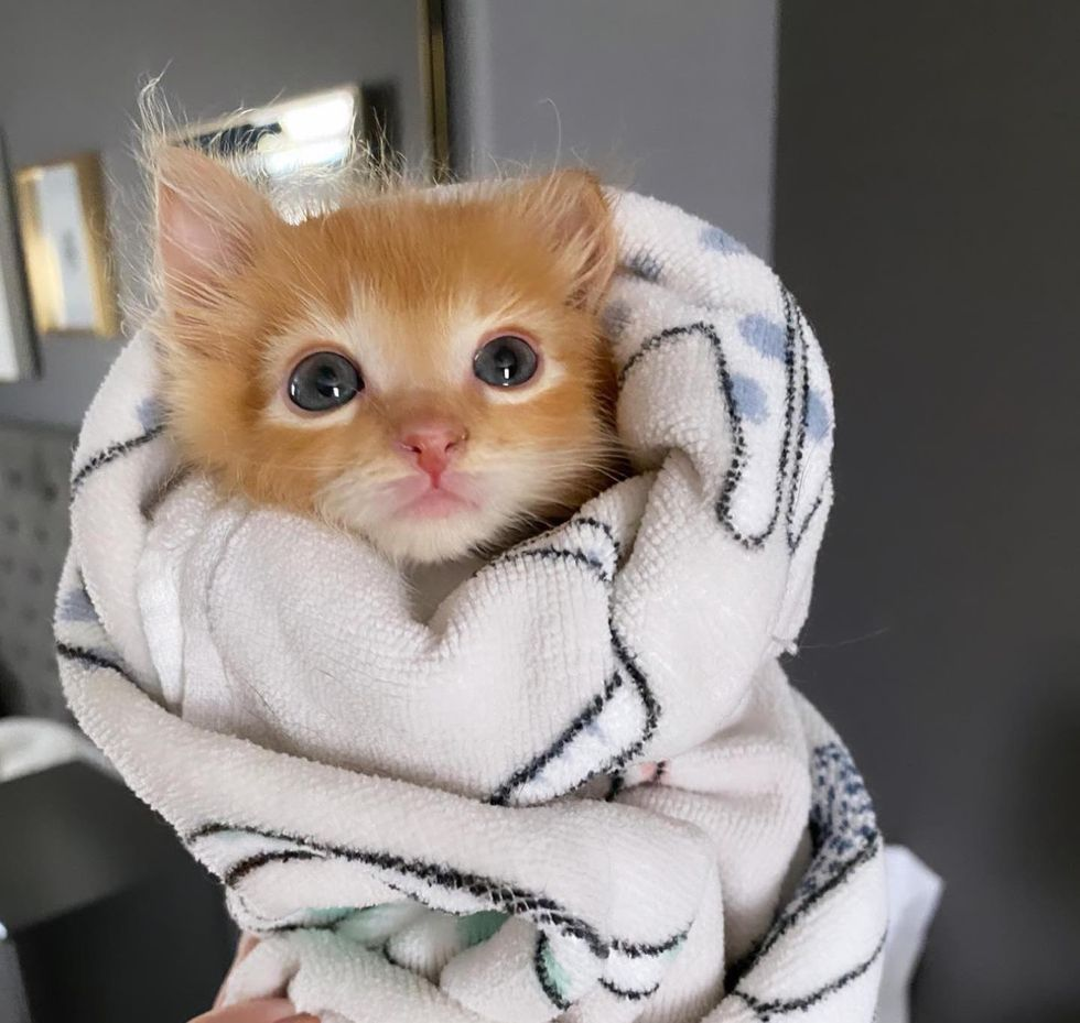 kitten purrito