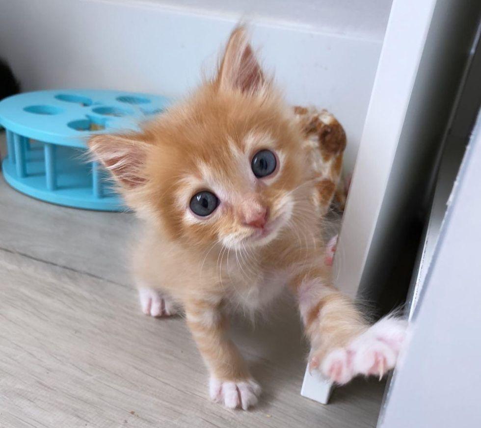 orange kitten sweet