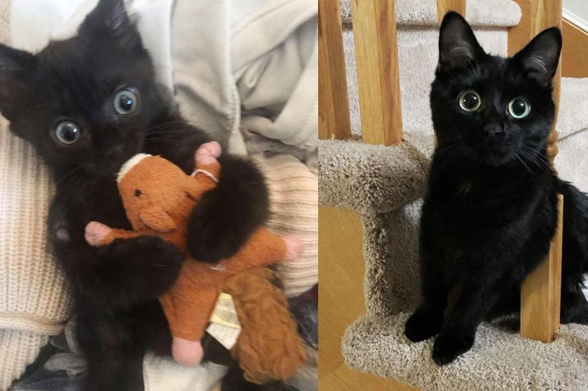 Kitten Scoots His Way to Perfect Home and Transforms into Feisty Doe-eyed Cat