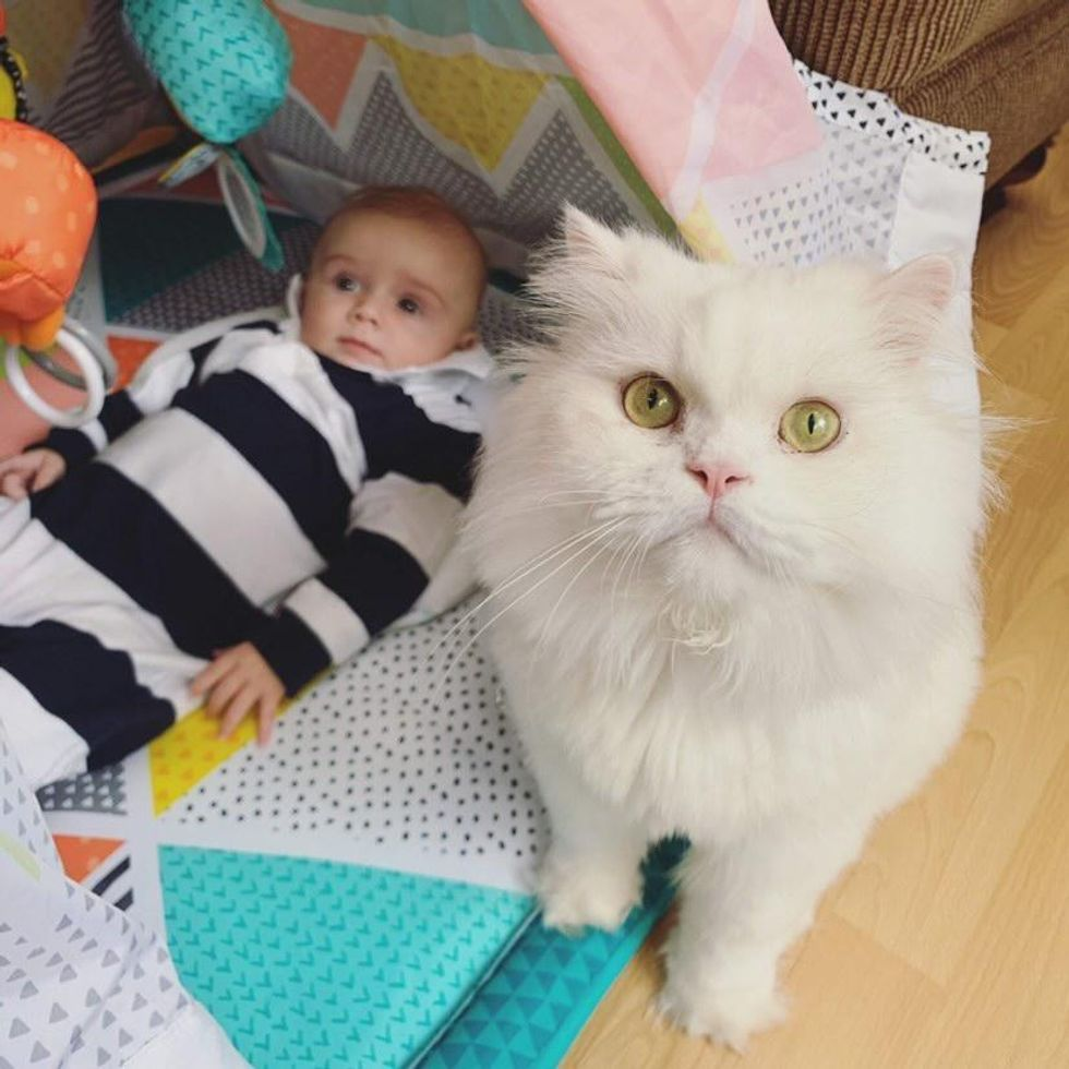 cat and tiny human