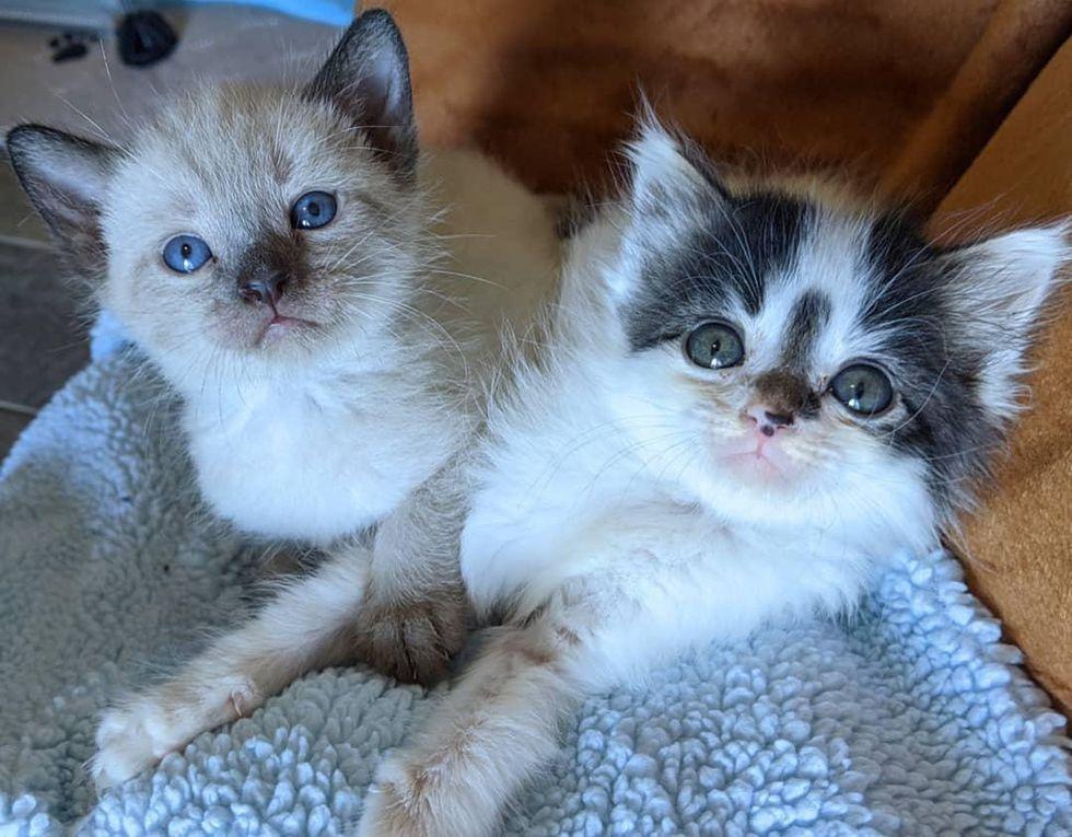 best friends, kitten brothers