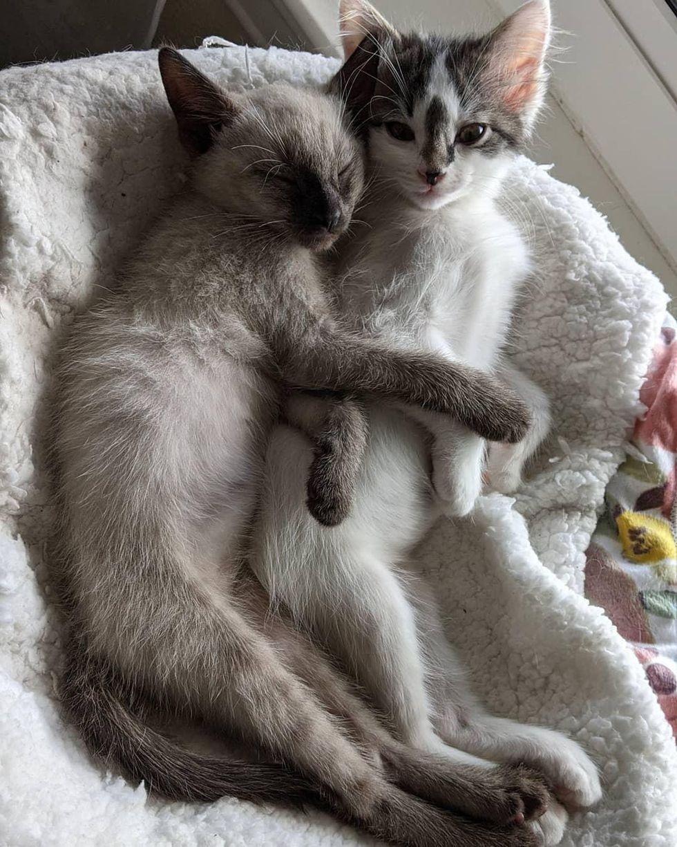 snuggly kittens, best friends