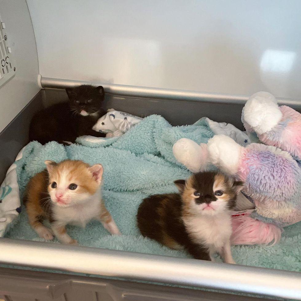 demanding kittens