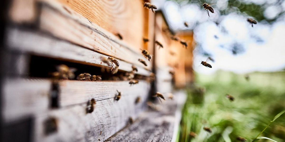 Here's Everything You Need to Know About Saving the Bees