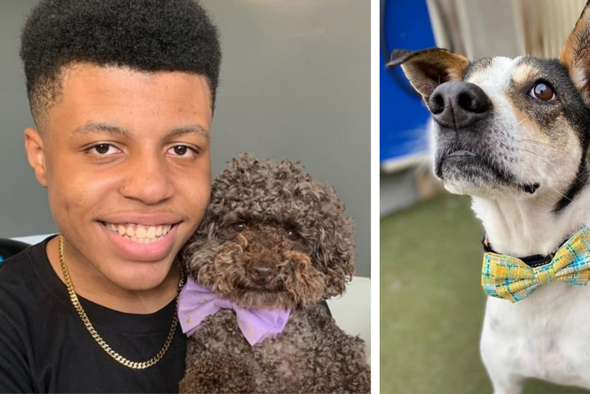 14-year-old makes and donates bow ties to help shelter animals find their forever homes