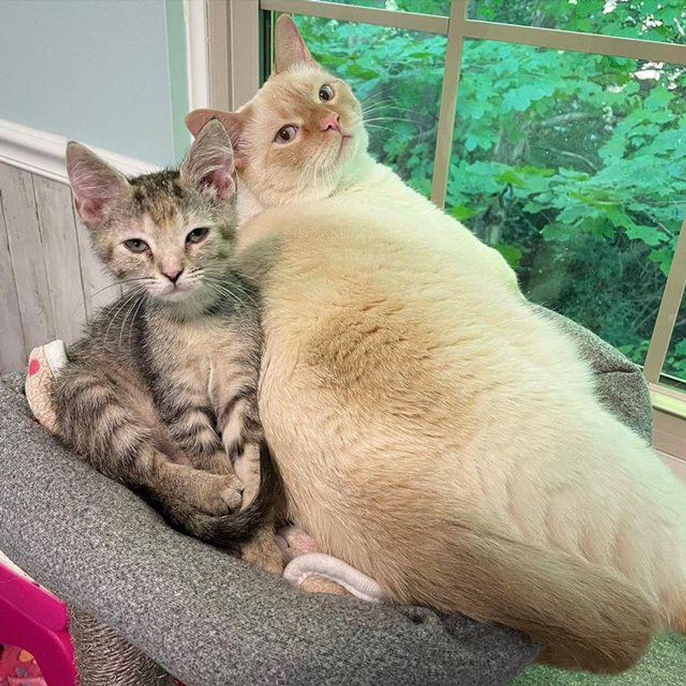 cat snuggles kitten
