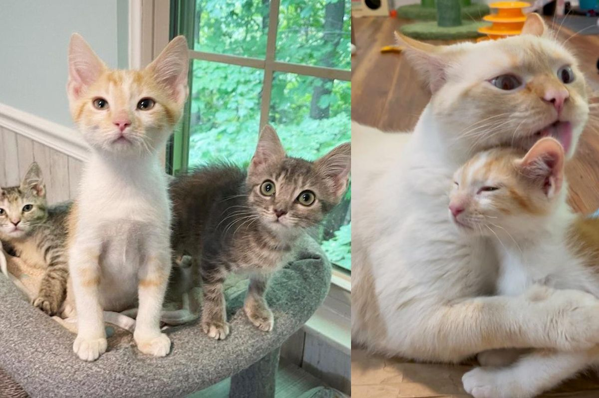 3 Kittens Get Back on Track and Really Transform with the Help of Nurturing Cats
