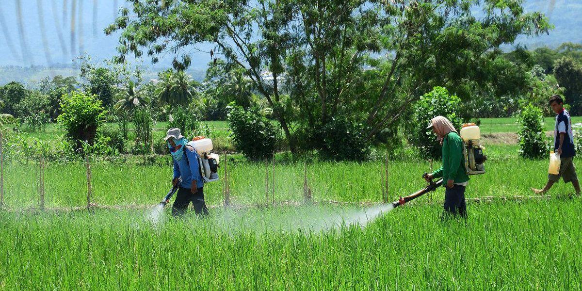 pesticides ALS