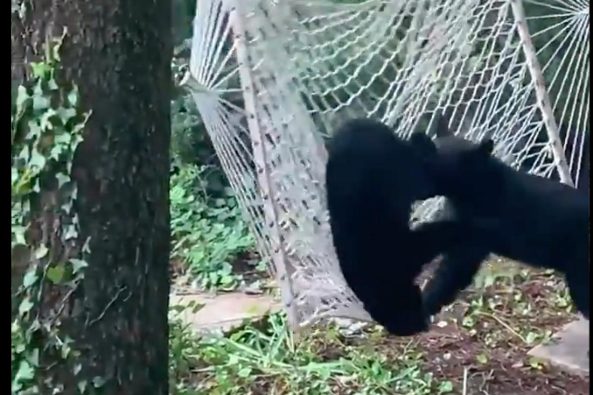 Bear hammock Gatlinburg Tennessee