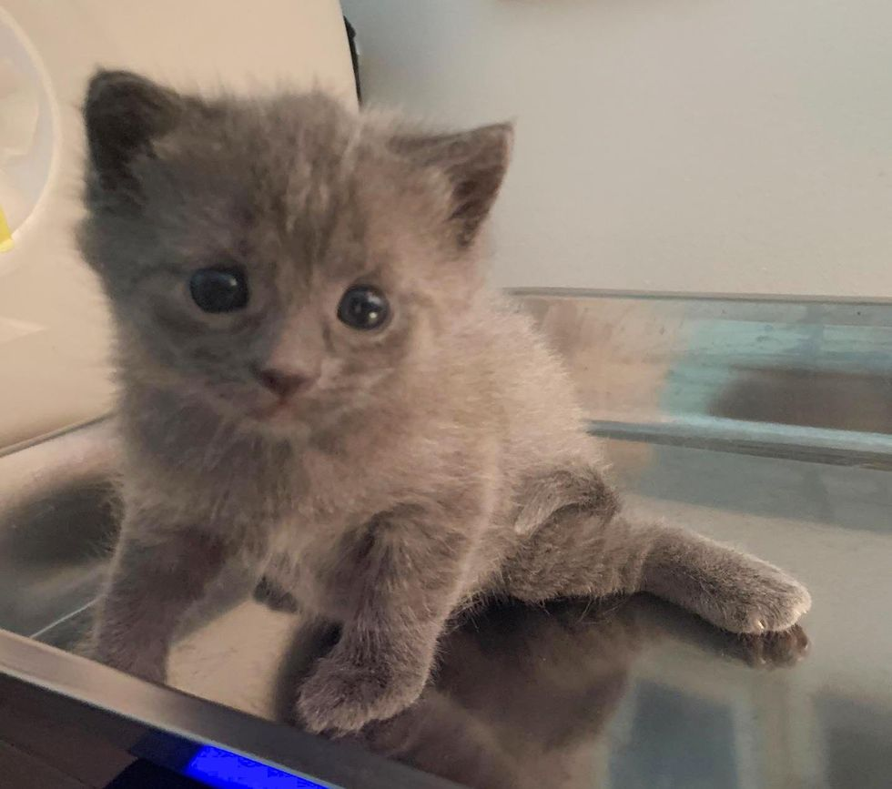 kitten swimmer syndrome