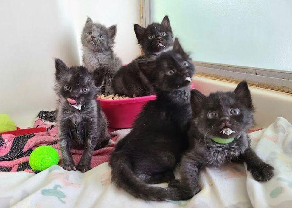 litière pour chatons