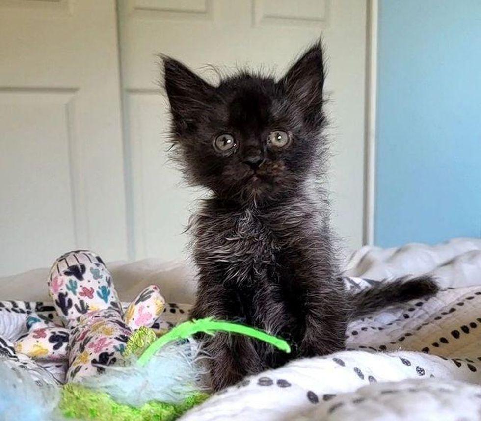 chaton duveteux flou