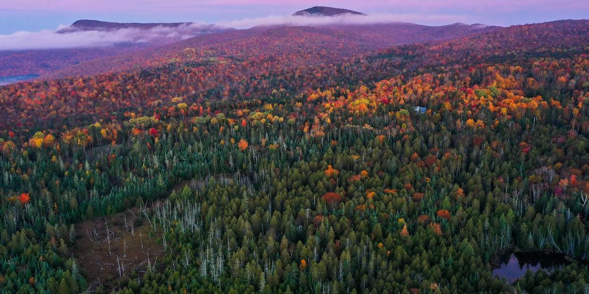 Climate Change Is Muting Fall Colors — It's the Latest Way Humans Have Altered U.S. Forests