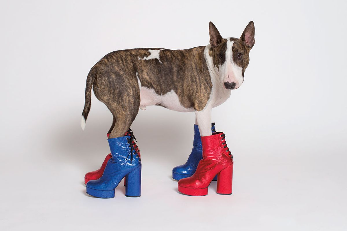 Neville Jacobs Is Instagram's New Power Pooch