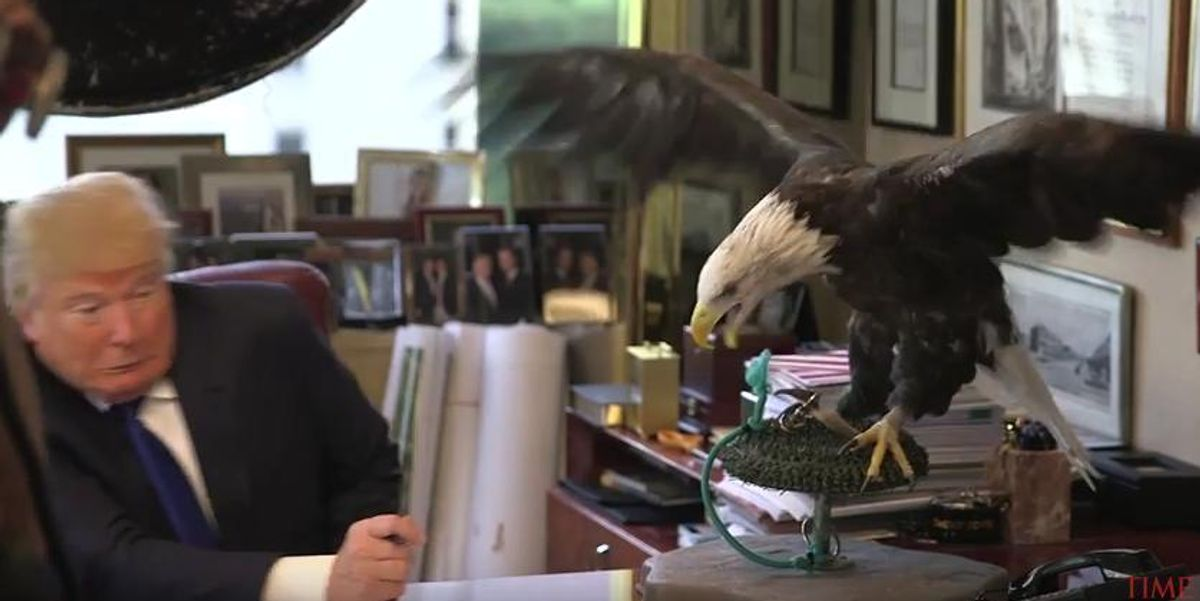 ICYMI: Watch Donald Trump Almost Get Mauled By A Bald Eagle