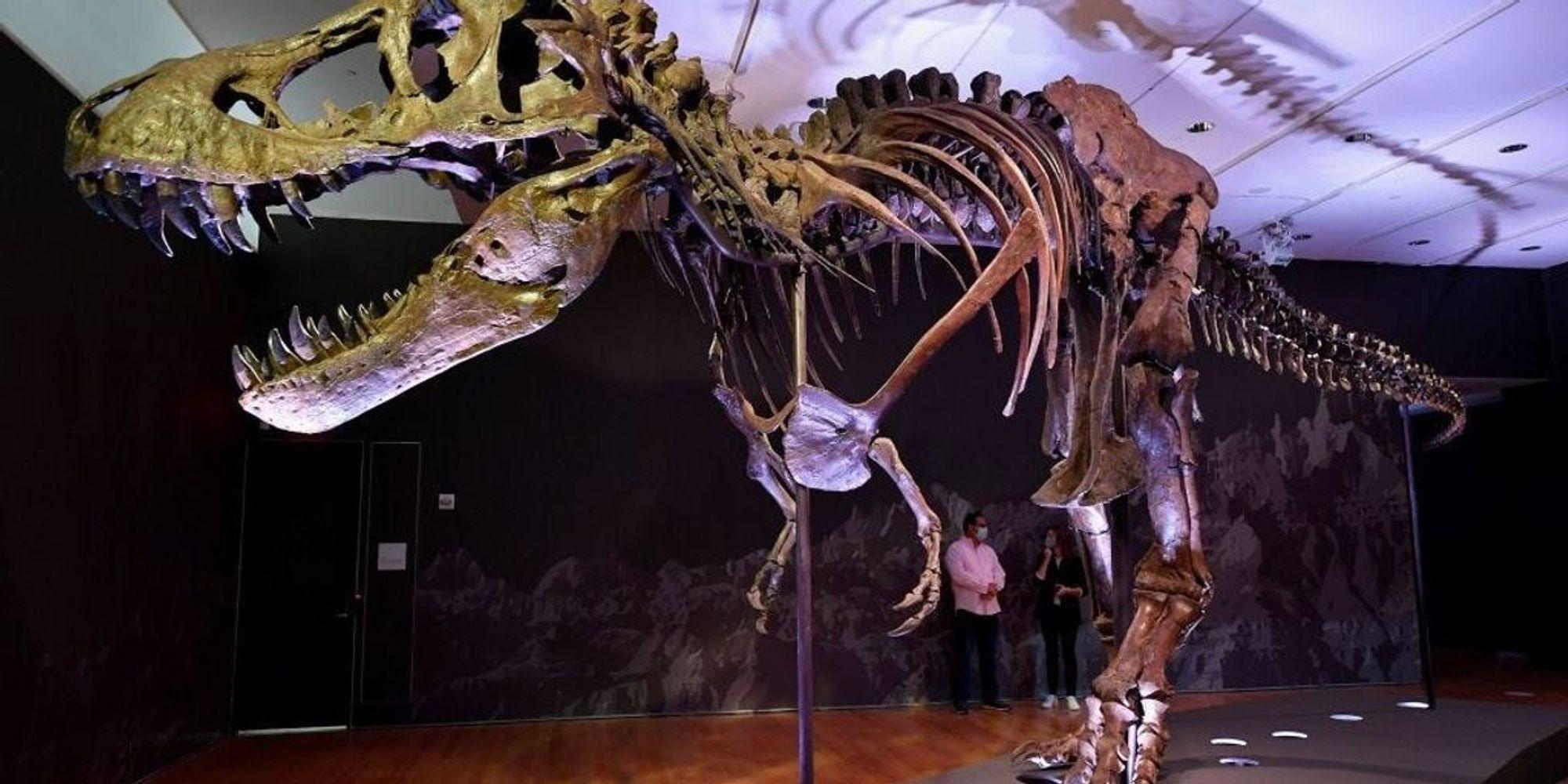 Akár a te nappaliba is kerülhet Stan, az óriási T-rex