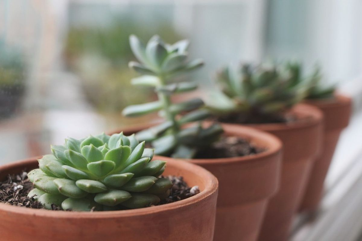 Why Caring for Plants Means Caring for Yourself