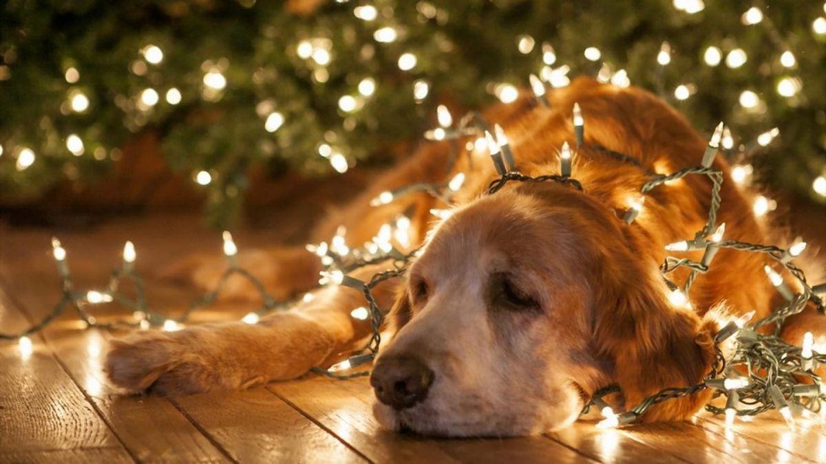 PSA: November Is Not Christmas