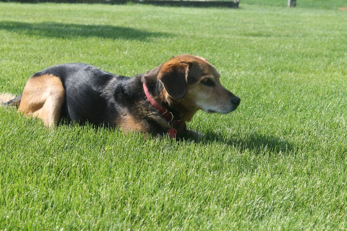 An Open Letter to My Dead Dog