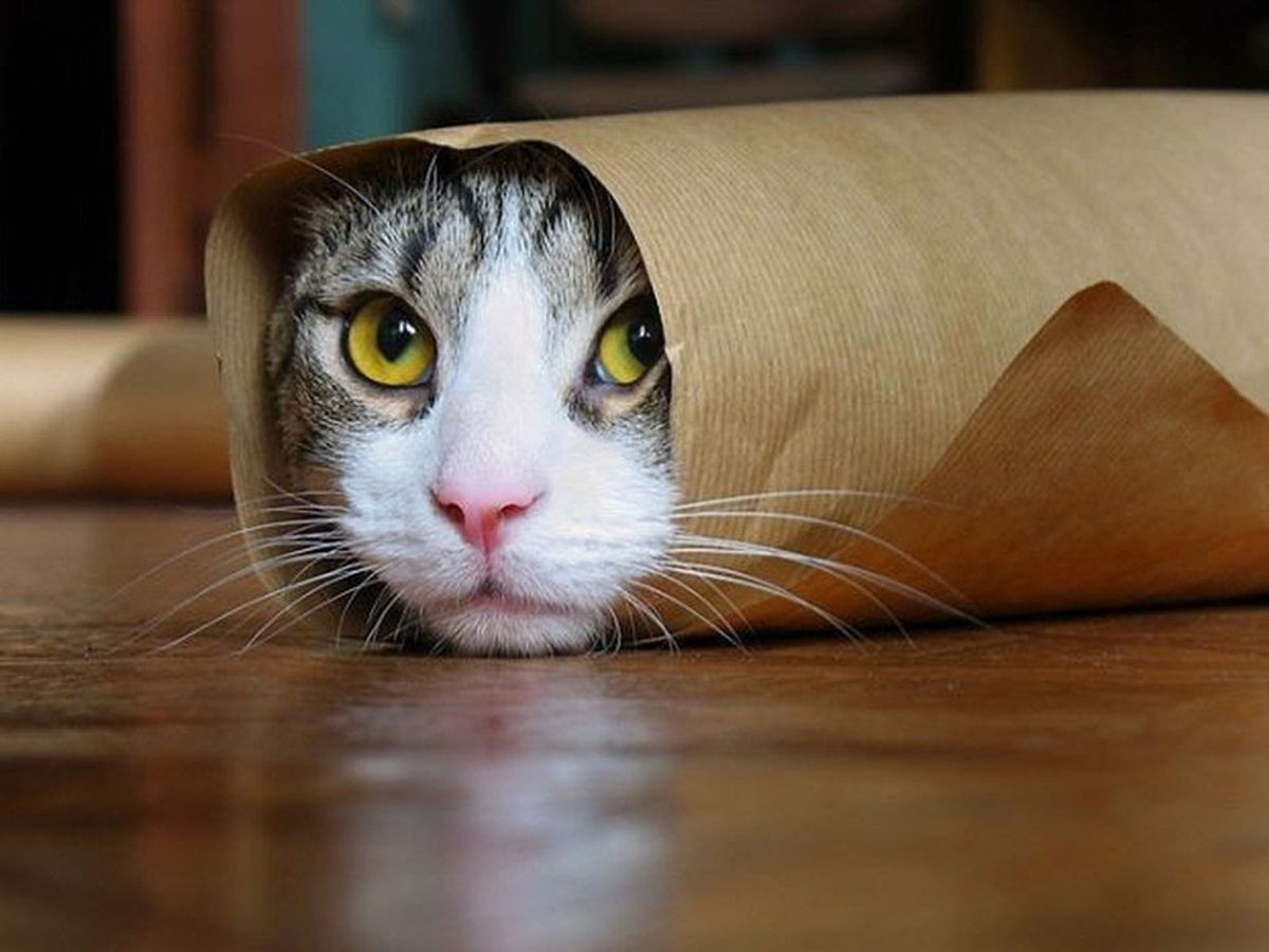 10 Cool Facts About Cats.