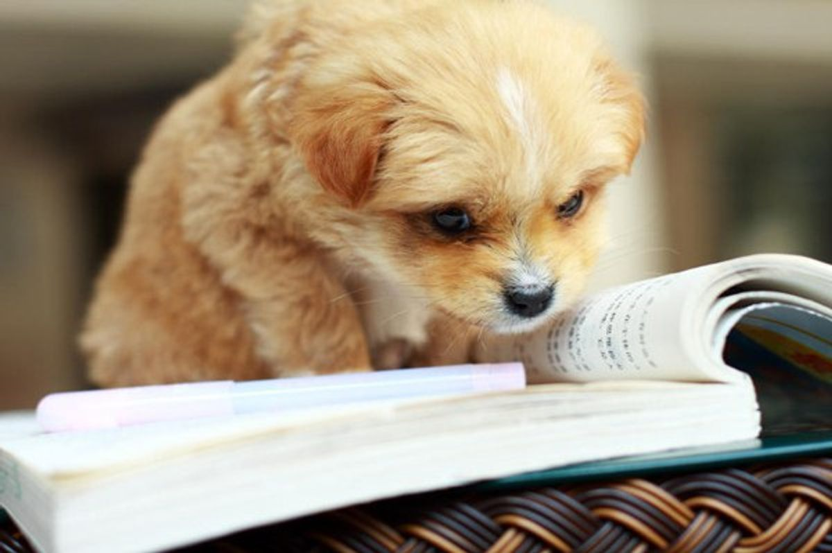 Finals Week As Told By Puppies