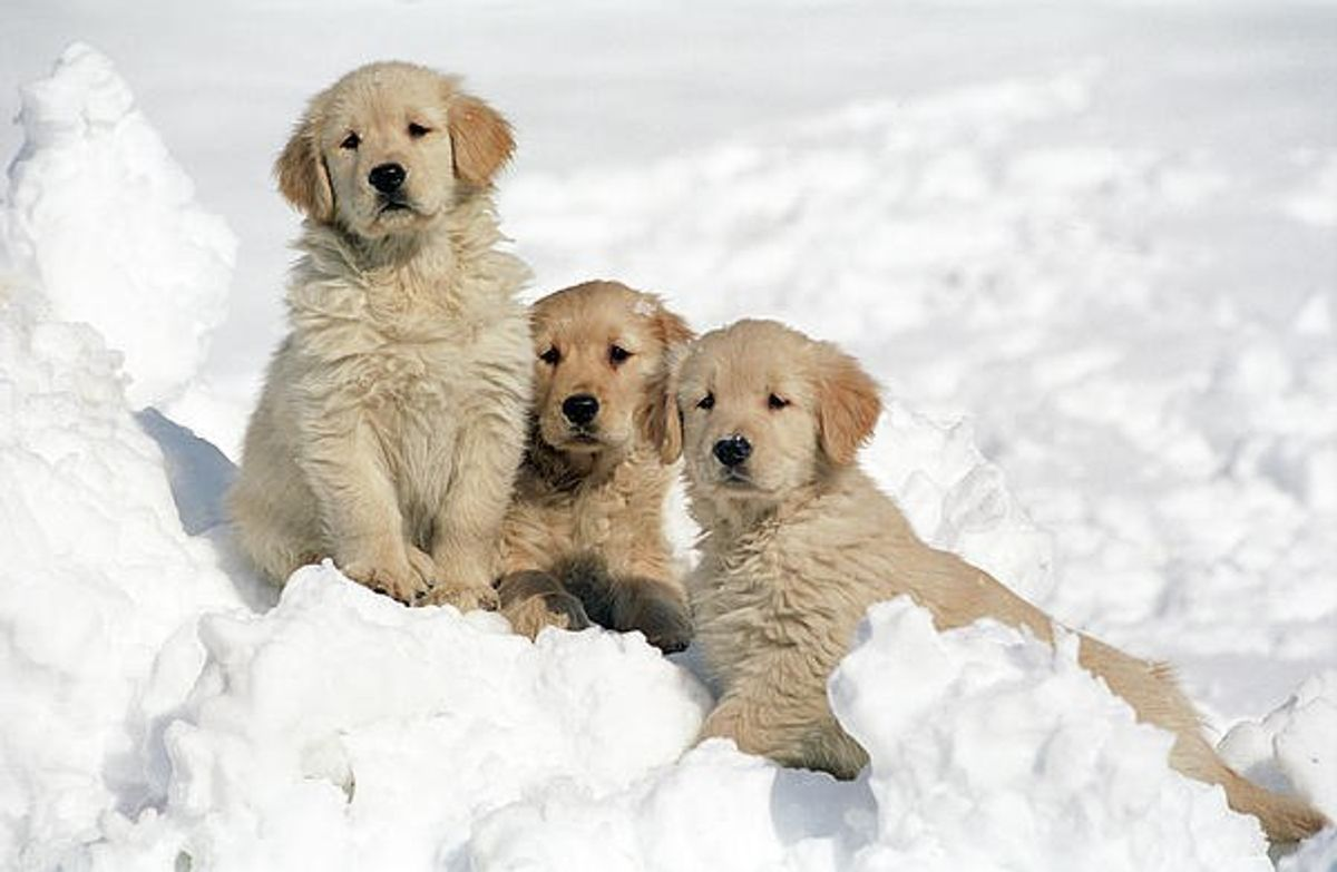 A Puppy's Guide To Snow