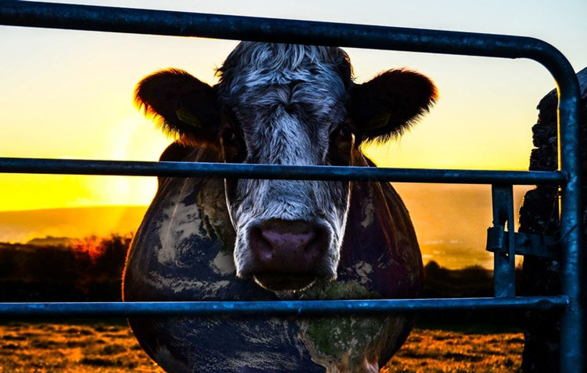 'Cowspiracy: The Sustainability Secret' A Must-See Documentary