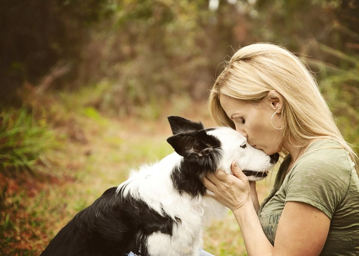 Why A Rescue Dog Is The Best Dog