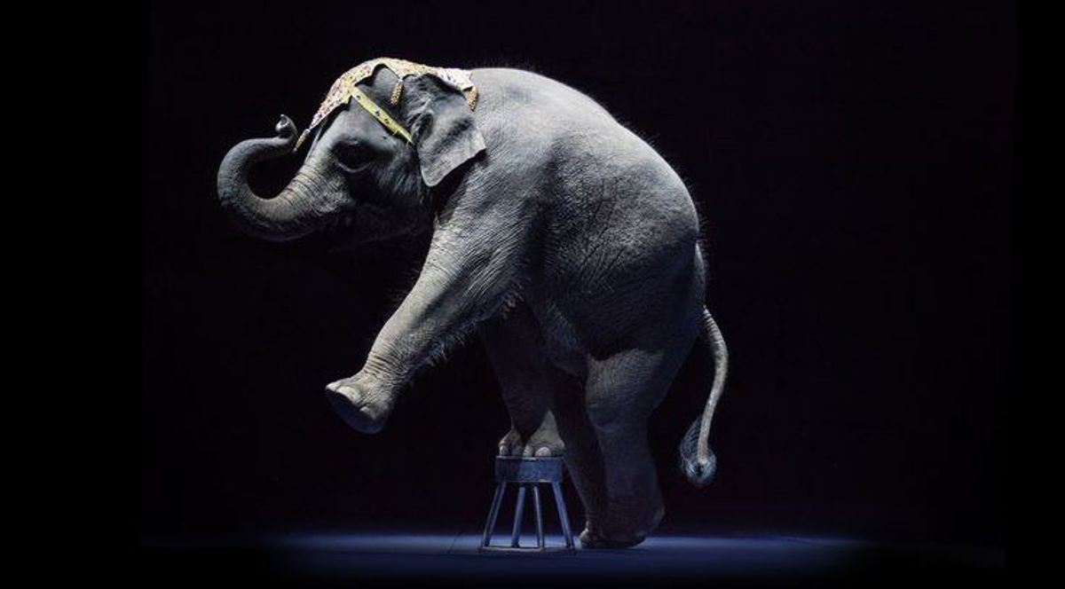 Wild Animal Performances: A Form Of Abuse