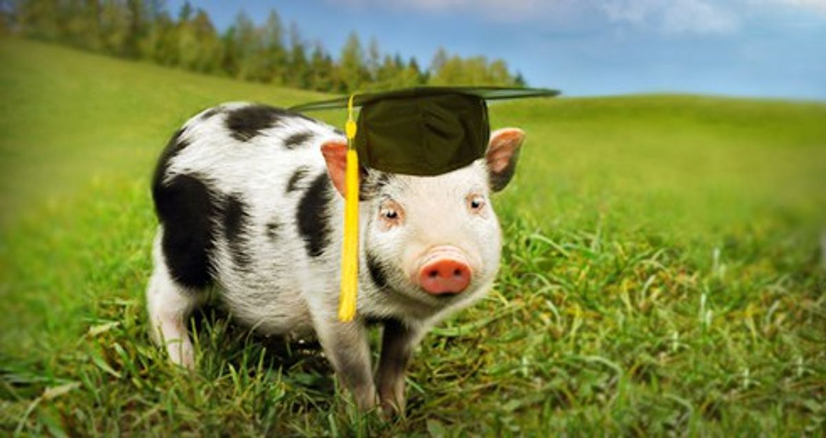 """""""College,"""" As Told By Pigs"""