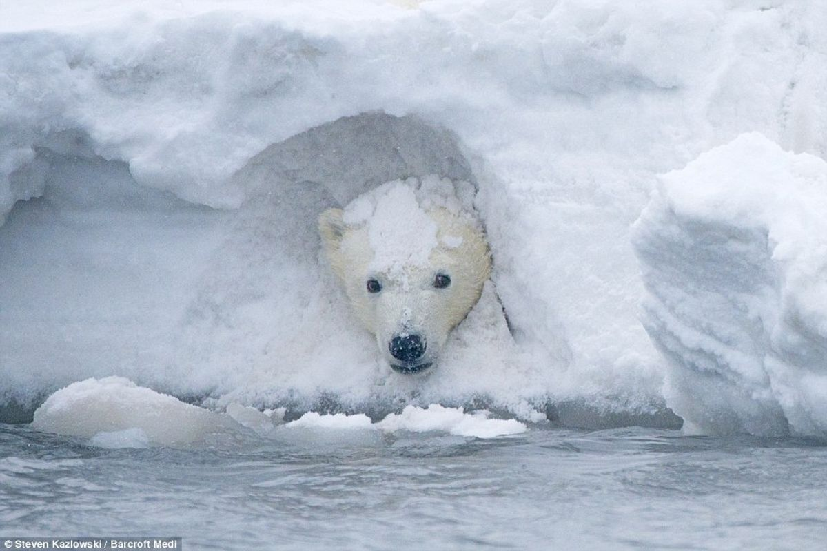 Animals In Snow Is The Greatest Thing You'll See Today