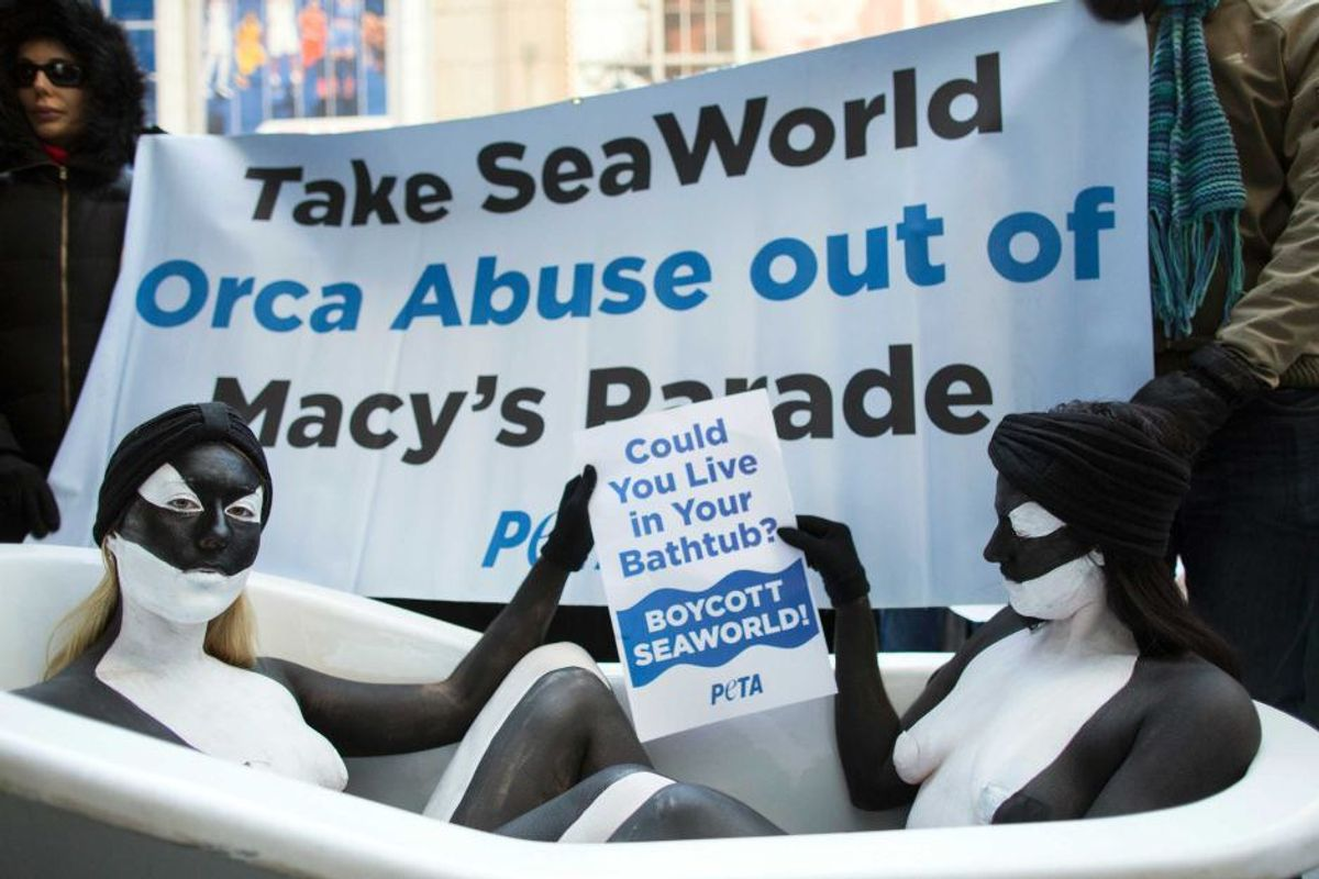 Why SeaWorld Shouldn't Be A World Orcas Live In